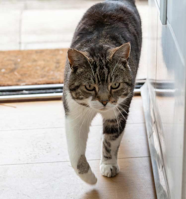 Rocky the Digital Paw family cat